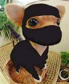 Ninja CheeWee